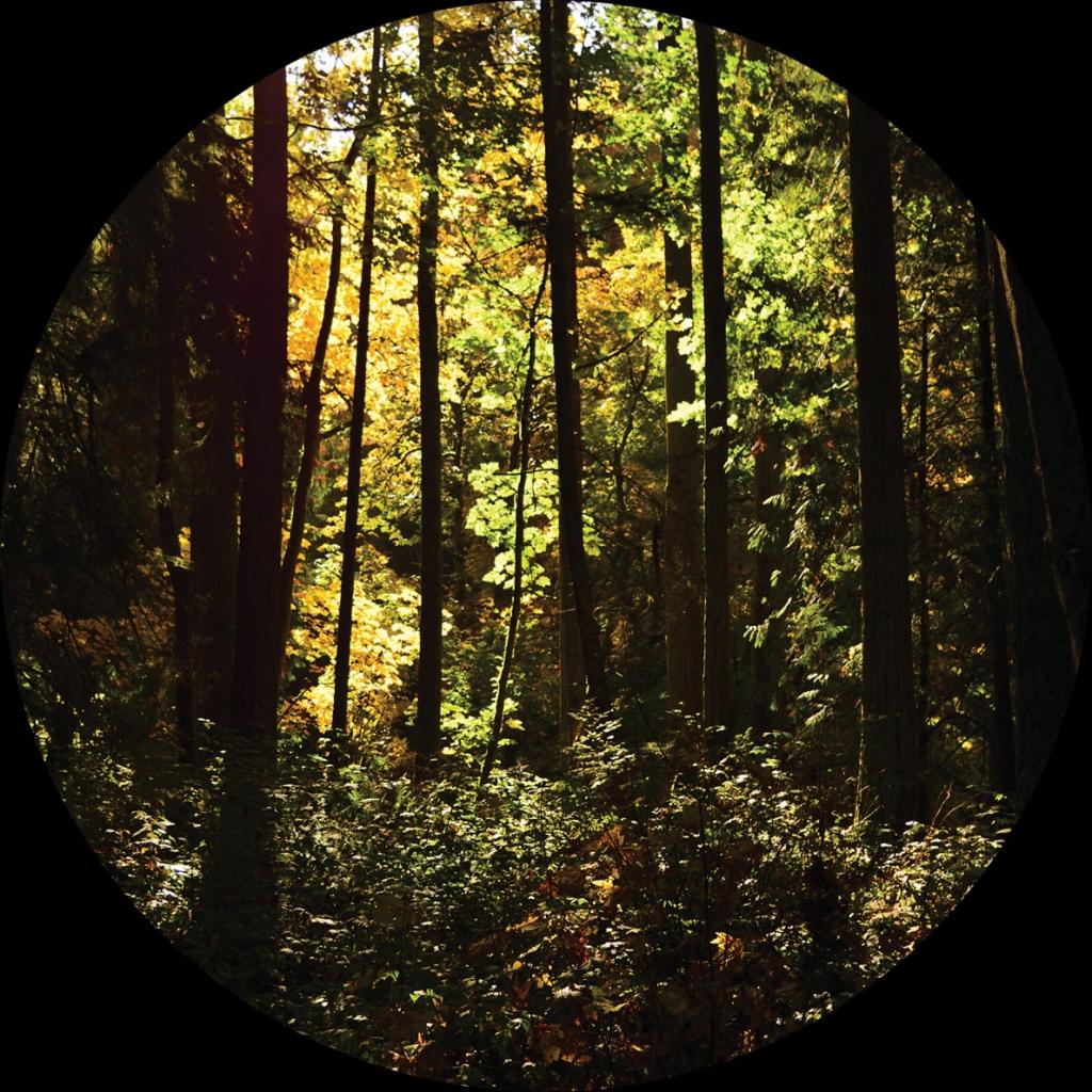 """( JJB-001 ) JARED WILSON- New Era (12"""") Jason, Jared & Brians' Records"""